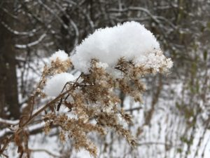 fresh snowflakes piled on top of fall weeds