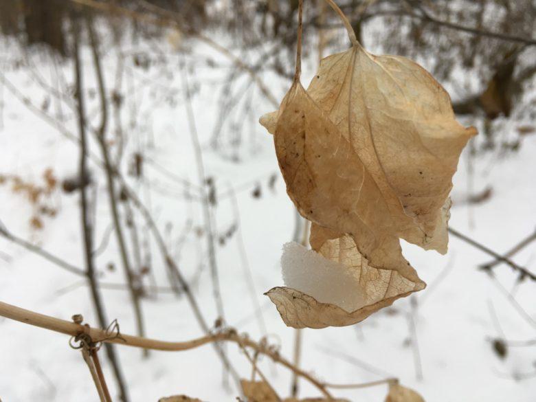 cradling winter