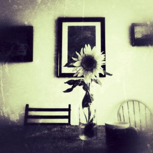 sunflower on table with pottery mug and paintings on the wall behind with vintage, yellow and texture edits