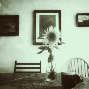 photo of sunflower in glass vase on a table with a blue pottery mug and blue painintings on the wall behind, edited into green and vintage