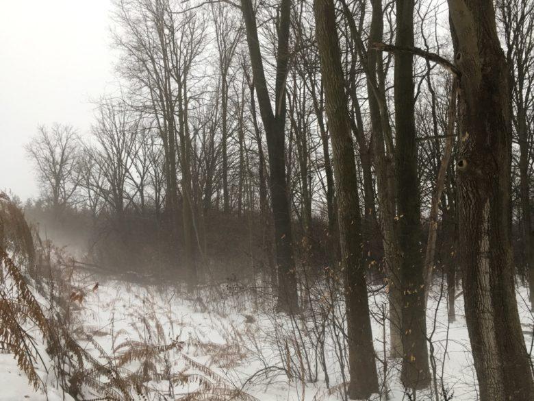 fog approaches