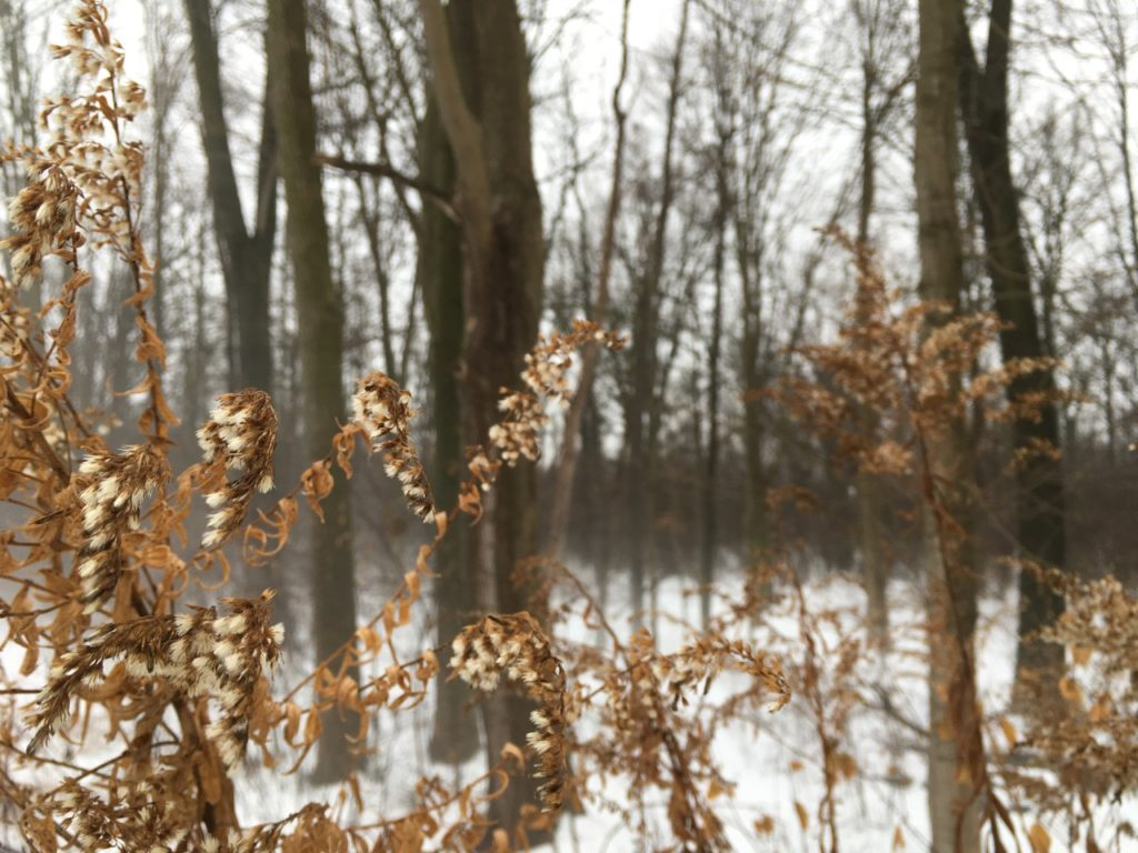 weeds in foreground with fog rising in the woods behind