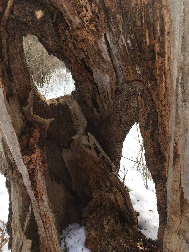 looking through a rotten tree stump's holes like windows, onto the winter meadow beyond