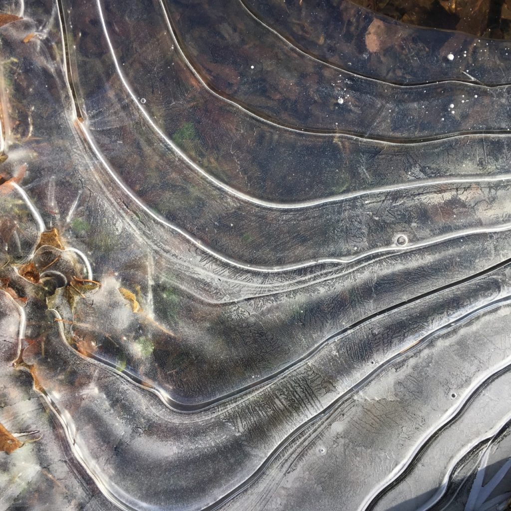 frozen ripples around base of old oak tree form what looks like a musical score