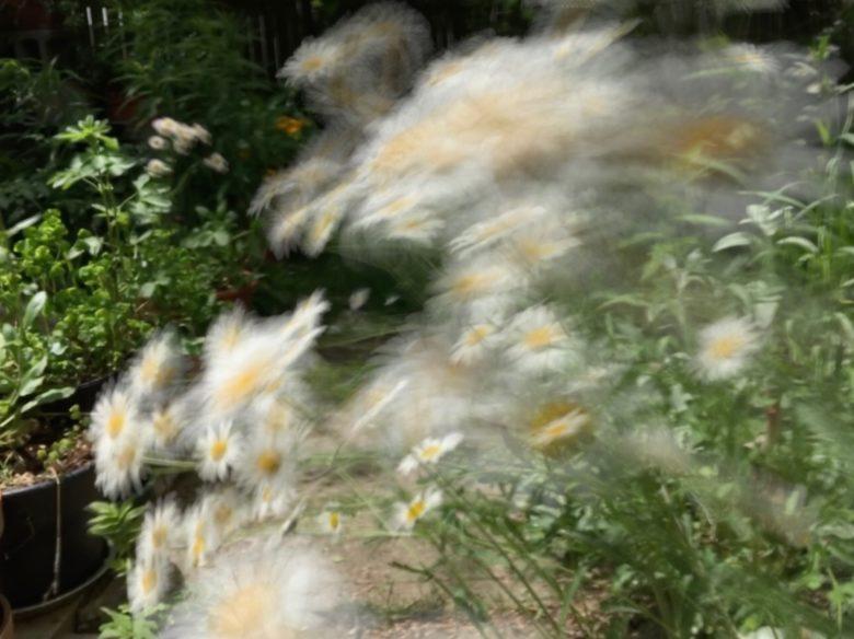 Springtime wind