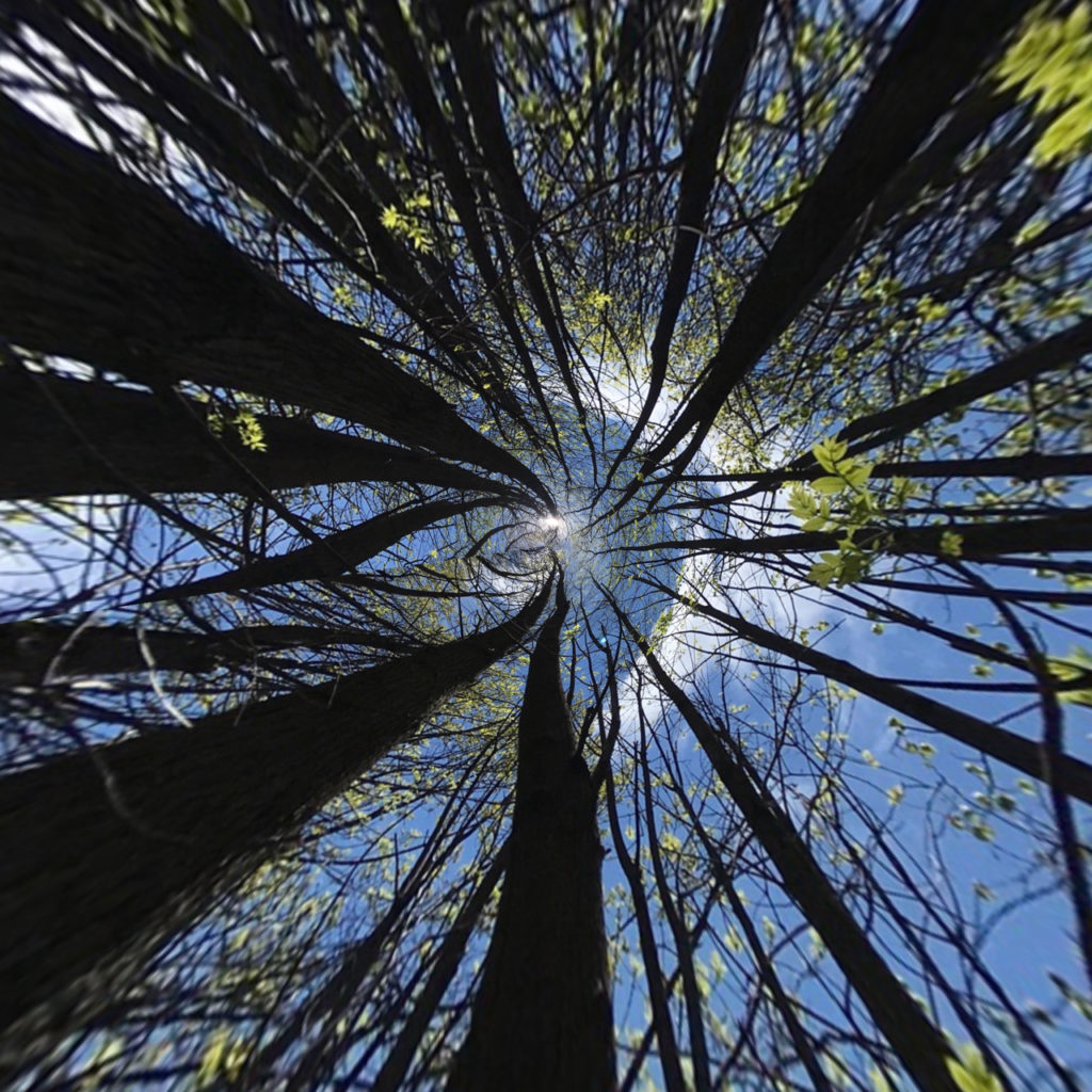 blue sky and tree tops spun into a circle through Apps for editing smartphone photos