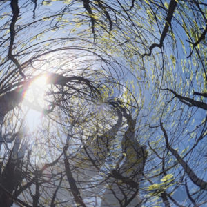 Apps for editing smartphone photosmake treetops appear to be spinning into the sun