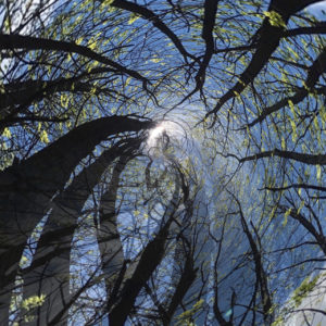 Apps for editing smartphone photos make tree tops spinning into blue sky and sun